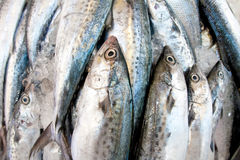 Mackerel in a wet market Stock Images