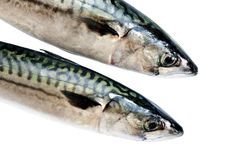 Mackerel on white Royalty Free Stock Photography