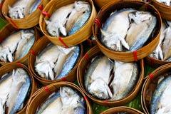 mackerels Royaltyfri Bild