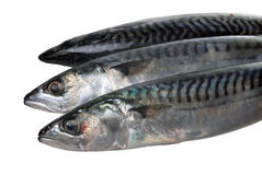 Mackerels Royalty Free Stock Photos