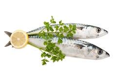 Mackerels Stock Images