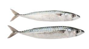 Mackerels Stock Photos