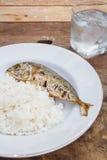 mackerels Royaltyfria Bilder