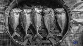 Mackerels in a basket. Streamed mackerels line up in a basket Royalty Free Stock Images