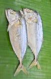 Mackerels. Mackerels with green banana leaf Stock Photography