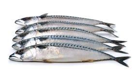 Mackerels isolated on white Stock Image