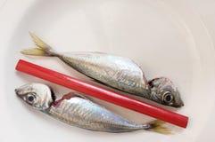 Between mackerels Stock Photo