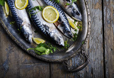 Mackerels on silver plate royalty free stock images