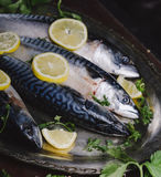 Mackerels on silver plate Royalty Free Stock Photo