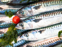 Mackerels and tomato Stock Images