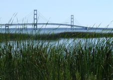 Mackinac Bridge with Cat tails. Royalty Free Stock Photos