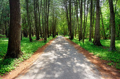 Mackinac Island Trail, Forest in Michigan,USA Royalty Free Stock Photos