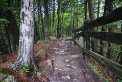 Mackinac Island. A walk through the woods on a summer day Royalty Free Stock Photography