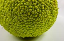 maclura pomifera,哇洒琪橘,马苹果,亚当绿色果子  图库摄影