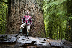 MacMillan Provincial Park Cathedral Grove Vancouver Island stock image
