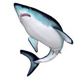 Maco-Haifisch Stockfotografie