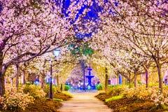 Macon Georgia Cherry Blossoms Stock Image