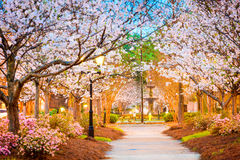 Macon, Georgia, USA. In the spring Stock Photo