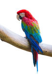 Macow bird Stock Images