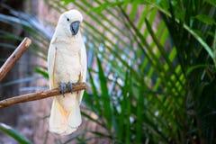 Macow-Papagei Lizenzfreies Stockfoto