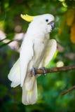 Macow papegoja royaltyfri fotografi