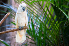 Macow papegoja Royaltyfri Foto