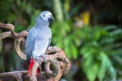 Macow papegoja Royaltyfri Bild