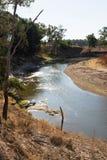 Macquarie rzeka, Nowe południowe walie, Australia obrazy royalty free
