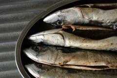 Macrela fishes Royalty Free Stock Image