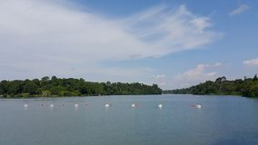MacRitchie-Reservoir stockfotos