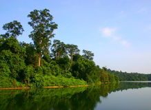 MacRitchie Reservoir. Reflection of tropical forest  in MacRitchie Reservoir Royalty Free Stock Photos