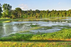 Macritchie reservoir with plants on the water Stock Photos