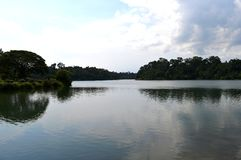 MacRitchie Reservoir Stock Image