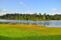 Macritchie Reservoir with trees and grass field Royalty Free Stock Image