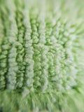 Macro élevé de rapport optique de haut tissu ou tapis absorbant vert photo stock