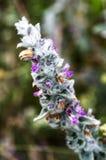 Macro étroit des wildflowers Photo libre de droits
