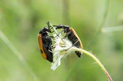 Macro étroit des wildflowers Photographie stock libre de droits
