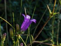 Macro étroit des wildflowers Image stock