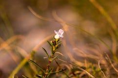 Macro étroit des wildflowers Images stock