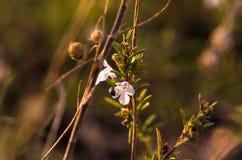 Macro étroit des wildflowers Images libres de droits