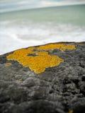 Macro étroit du lichen sur le pilier en bois avec l'horizon brouillé Photographie stock