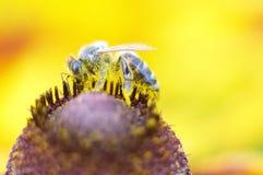 Macro abeille Image libre de droits