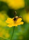 Macro abeille dessus Photo stock