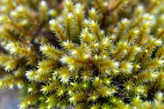 Macro with above view of fresh green moss in woods Stock Photo
