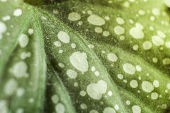 Macro abstract background of green spotted leaf. stock images