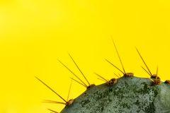 Macro abstract of cactus thorns of on punchy pastel yellow background with copy spase. stock photo