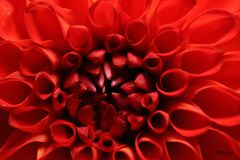 Macro abstract  flover in summer. Macro abstract flover in summer time Royalty Free Stock Images