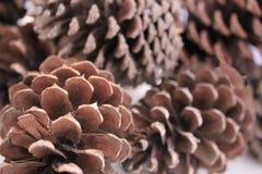 Macro abstracta de los conos del pino aislados, vista ascendente cercana de los conos del pino para las texturas, fondo del cono  Fotografía de archivo libre de regalías