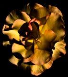 Macro abstrato da flor Foto de Stock Royalty Free