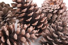 Macro abstrato dos cones do pinho isolados, vista ascendente próxima de cones do pinho para texturas, fundo do cone do pinho, tex Fotos de Stock Royalty Free